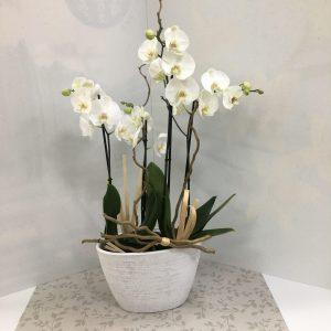 composition d'orchidées 4 tiges