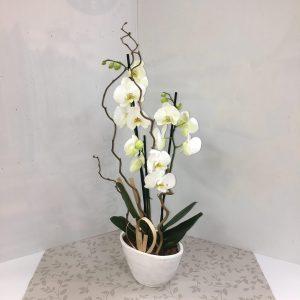 une magnifique orchidée mise en valeur
